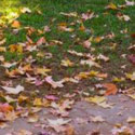 Leaf Removal / Fall Cleanup